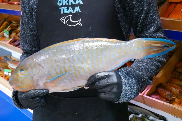 Parot - Ryba papuzia